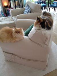 Florida kitties
