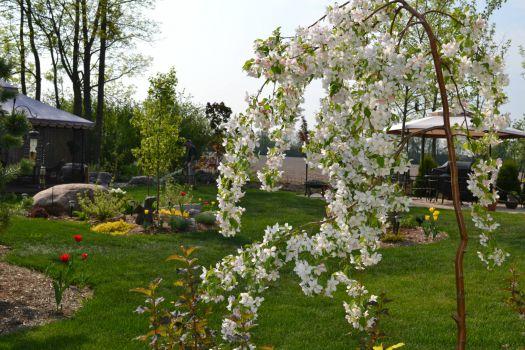 Backyard - spring 2013