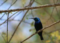 sunbird, Madagascar