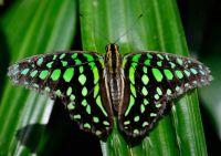 """4  ~  """"Butterfly dressed in 80's NeonGreen"""""""