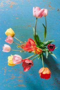 tulips-3209128