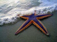 Bootiful starfish