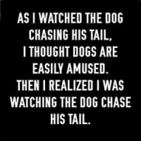 As I watched the dog chasing his tail