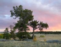 Sunset - Vedauwoo, Wyoming