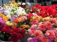 Bouquets of beauty for everyone, enjoy!, 63 pieces