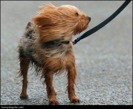 Doggone Santa Ana winds!!!