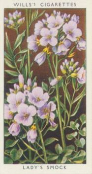 Lady's Smock  /  Mills's Cigarette Cards of the 1920s
