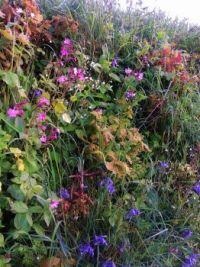 Wildflower bank in May, Devon