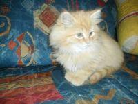 Kitten Monty