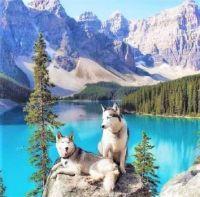 Mountain Huskies at Lake Moraine, Canada