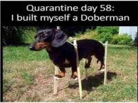 Quarantine Day 58