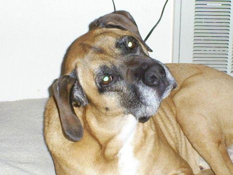 Max the Dog