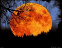 Harvest_Moon_by_boodie