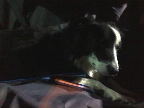 Darcy in the dark #2