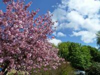 Ahh Spring in Denmark