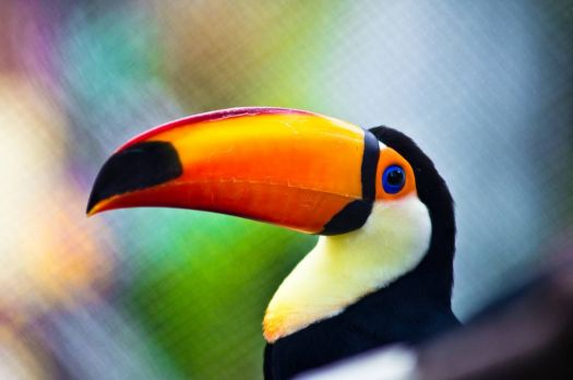 Toucan Bird, by desmorider on flickr