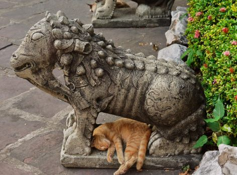 Cat and a lion in Bangkok