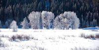 Frosty Teton morning