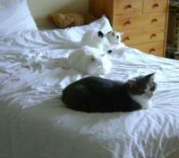 Ash, Freya and Tyr - There were three in the bed and the little one said...