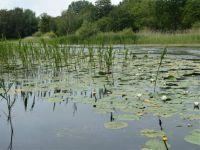 Tenellaplas, a small lake in the dunes of Rockanje