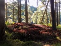 Woods at Aotea Harbour -NZ