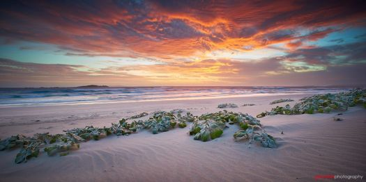 Observation Beach Esperance Western Australia