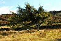 Ilkley Moor I