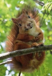 Cute squirrel