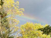 Fall 89 (bonus rainbow)