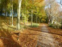 Autumn, fall or efterår