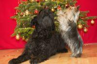 Yumminka a Jessie o Vánocích