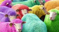 Crimes against sheep #5