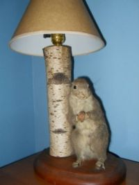 Funny (stuffed) squirrel with nut  lamp