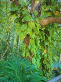 Florida Greenery