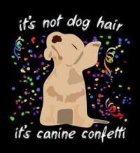 It's Not Dog Hair...