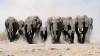 World Elephant Day - Medium Size