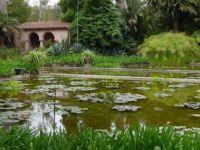 Lotusland Lily Pond