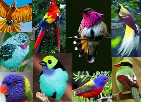 Colorful-birds-collage