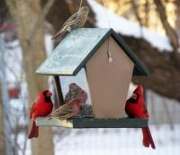 Cardinals and Finches