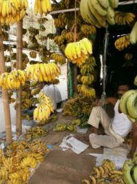 Indian banana's
