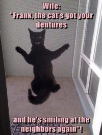 The cat's got your dentures