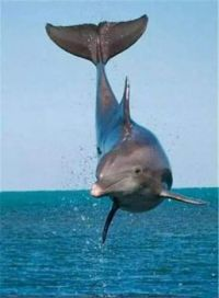 Wonderful Photo of a Dolphin