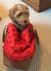 IMG_2648 Take me with you!