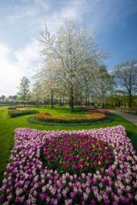 Keukenhof Gardens 2