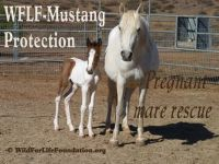 WFLF Mustang Rescue.Saving America's Horses