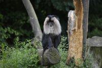 Zoopark Overloon