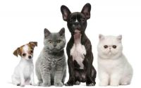 animals cats & dogs Plus puppy & baby kitten