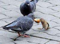 Sharing!
