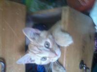 Cute kitten<3 [Large]