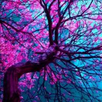 Purple Tree - Copy